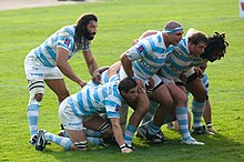 Facing right a group of seven men, in blue and white hooped jersey, bind together and crouch to form a scrum, the eighth player stands behind them observing the off-picture opposition.